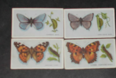 cigarette cards PHILLIPS BRITISH BUTTERFLIES No 1 ISSUE