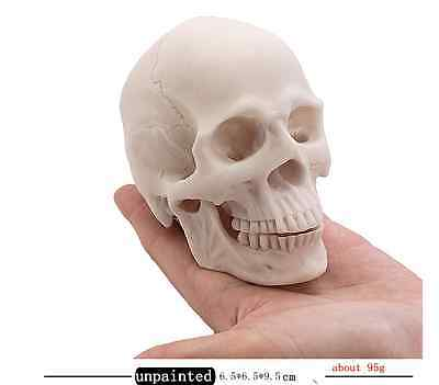 Clean Human Skull Replica Resin Unpainted Parted Medical Realistic Model