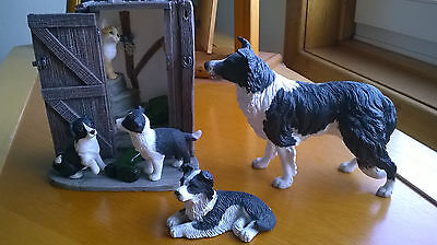 Border Collie Dogs Collection
