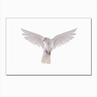 White Dove Postcards (Pack of 10)