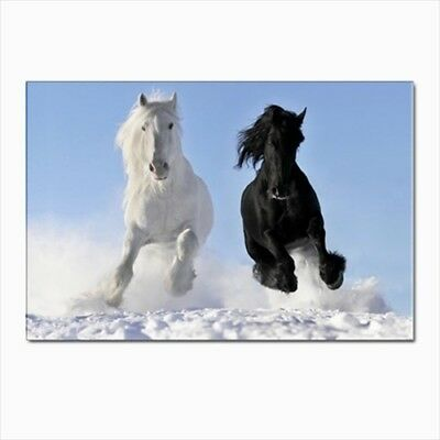 Black White Horses Stallions Postcards (Pack of 10)