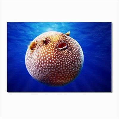 Puffer Fish Postcards (Pack of 10)
