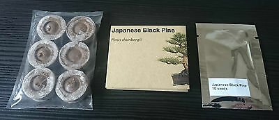 bonsai tree grow kit japanese black pine. seeds peat pellets and instructions