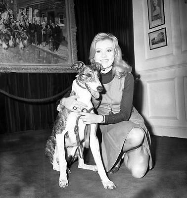 Hayley Mills And Her Dog 8X10 Photo 65