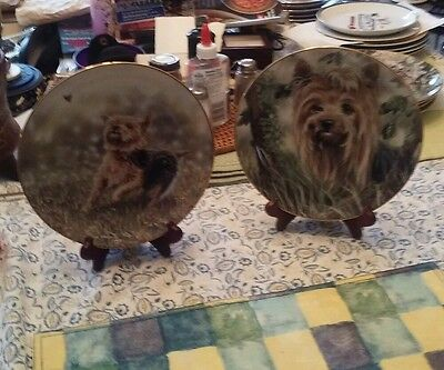 Danbury Mint Limited Edtion Yorkshire Terriers Plate