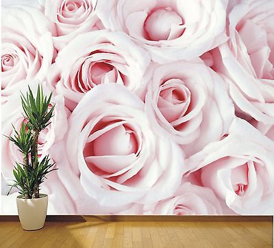 XXL Wallpaper Mural baby pink Roses close up photo wall mural (35405676) Floral