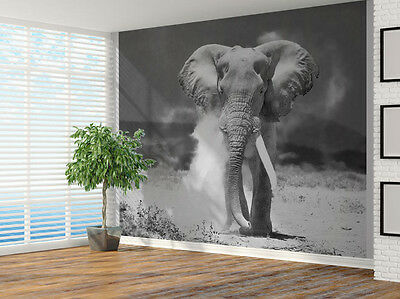 Black and white Elephant charging photo Wallpaper wall mural (4880893) Animal