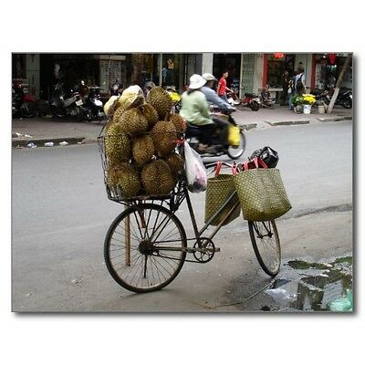 """*Postcard-""""Durian"""" (Fruit from Thailand)...for Sale on a Bicycle"""""""