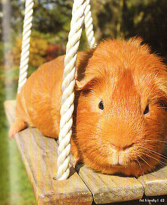 GUINEA PIG ON A SWING featured on a FRIDGE MAGNET