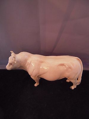Beswick Large Charolais Bull Gloss Finish - Lovely Piece. 9 in Long 5 in Tall.