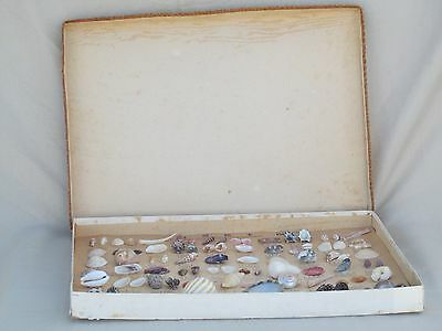 RARE VINTAGE Seashell Collection, Boxed, Labeled, JAPANESE Collectible 1950s