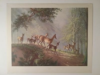 Original Vintage Print 'Family Outing' by Vernon Ward (1905-1985)