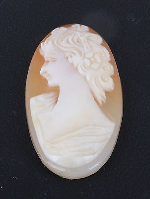 Cameo Carved Shell Unmounted Left Facing 0526B