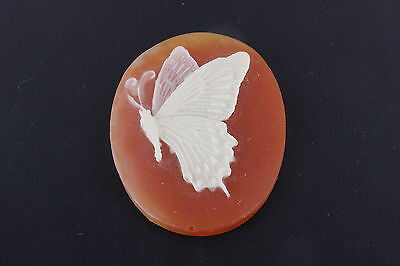 Costume Plastic Unmounted Cameo Butterfly 0577B