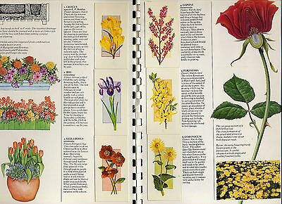 "1977  Craven  ""flowers  All  The  Year  Round""  Complete  Set  (50)  In  Album."
