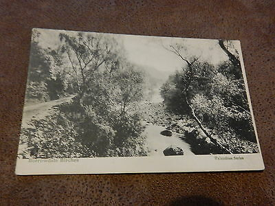 Early Valentines Postcard -Borrowdale Birches -Allerdale Cumbria -Lake District