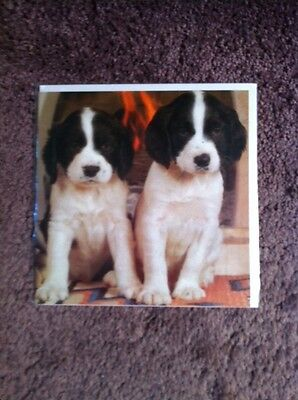"SET OF 5 JUMBO ENGLISH SPRINGER SPANIEL NOTECARDS ~ ~ 7"" x 7"""