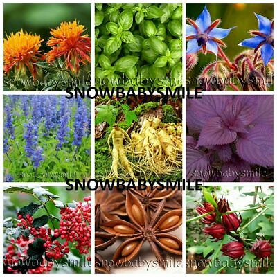Rare Herb Seeds Aromatic Spices Plant Medicinal Garden Heirloom Assorted Variety