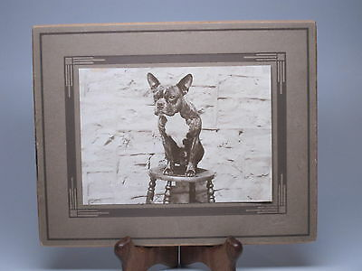 Antique Boston Terrier Dog Portrait Print 5x7 Matted 1920s Sitting on Stool Deco