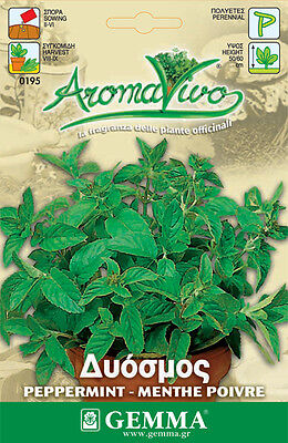 Peppermint Herb Seeds - Menta piperita aromatic - 0.15gr (1350 - 1500 seeds)
