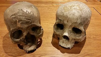 Pirates of the Caribbean: Dead Man's Chest Island Skulls Props With COA