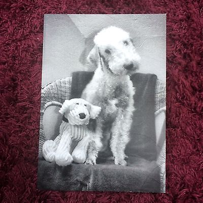 Pack of 5 A6 Bedlington Terrier Blank Cards