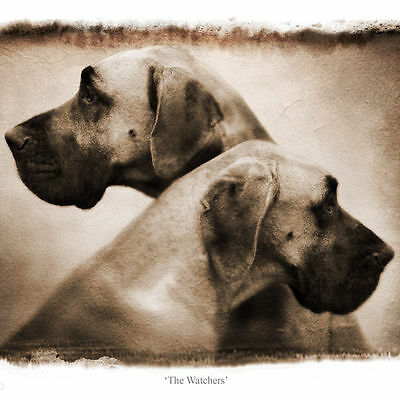 Great Dane * Limited Edition Print * -Dog Breed Fine Art Giclée Prints