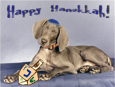 Pet Hanukkah Greeting Cards:Dog Weimaraner