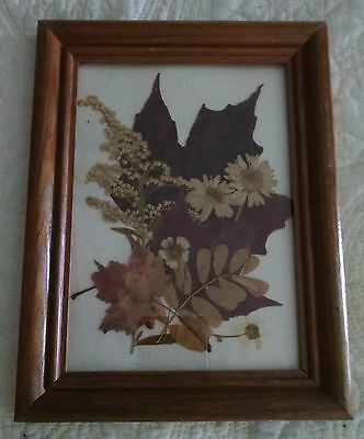 Pressed Leaves & Flowers in a Small Wooden Frame