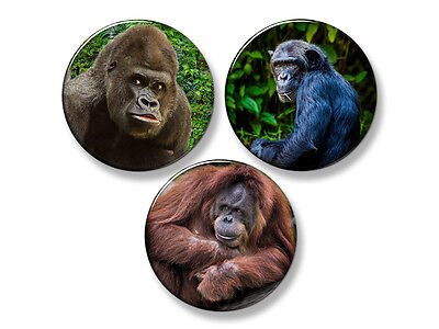 "GORILLA/CHIMP/ORANGUTAN Primates Fridge Magnet Set - 3 Large 2.25"" Round Magnets"