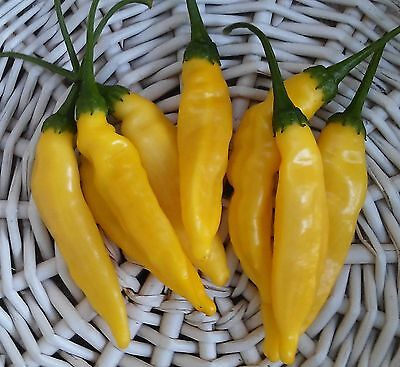 25+ Aji Limon Lemon Drop Hot Pepper Seeds