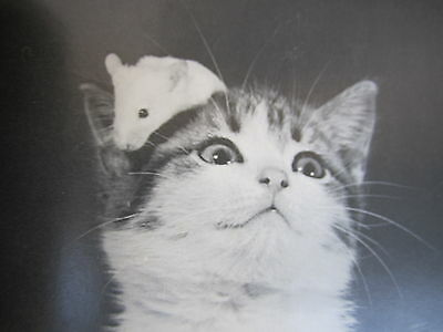 Cute Cat Picture Funny Humor Feline Facebook-like Photo Captions Vintage 1986
