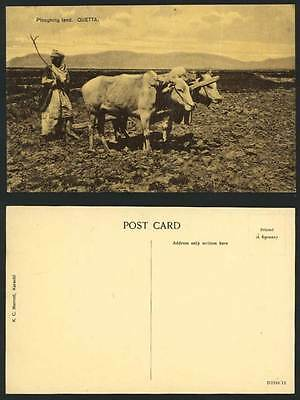 Pakistan Old Postcard Cattle Ploughing Farm Land QUETTA India Famer