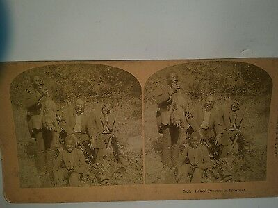 STEREOVIEW CARD BLACK  AMERICANA BAKED POSSUM IN PROSPECT Hunting