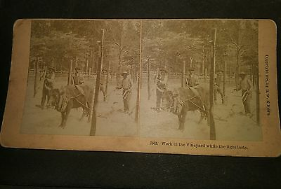STEREOVIEW CARD BLACK  AMERICANA Work in the Vineyard While Light Lasts 1892