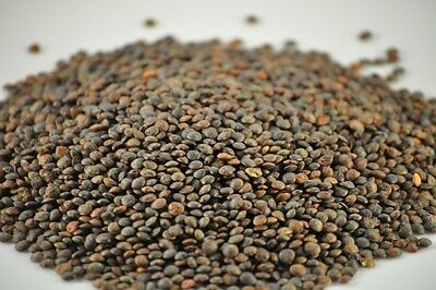 French Lentils - Du Puy (FREE SHIPPING )