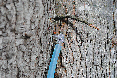 """Clear Maple Sugar Tree Taps -Spiles / Spout 5/16"""" + 1' Hose Pick Quantity Needed"""
