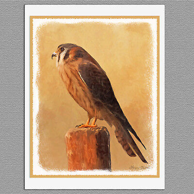 6 American Kestrel Wild Bird Blank Art Note Greeting Cards