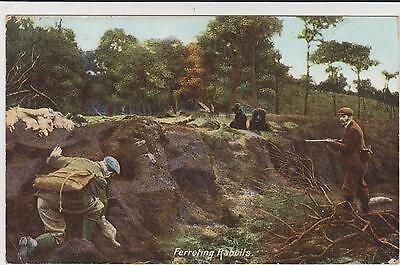 Pc Ferreting Rabbits , Hunting Shooting Posted 1906
