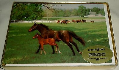 Leanin' Tree Equine Gallery 8 Assorted Blank Cards With Envelopes - Horses - New