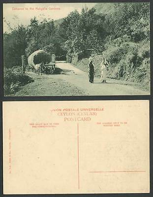 Ceylon Old Postcard Entrance to Hakgalla Gardens Nuwera Eliya Bullock Cart Woman