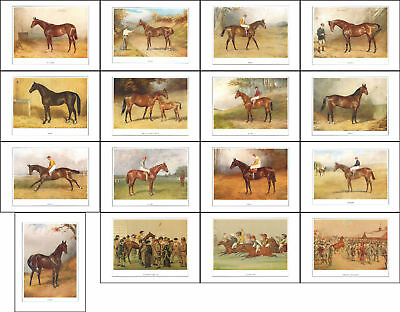 Racehorses - Set  Of  16  Race  Horses  Of  Vanity  Fair - (Repros) -  £14.95 !!