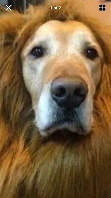 Large Dog Fancy Dress Lion Mane New Without Tags With Ears! Cute & Bit Scary. Uk