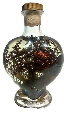 Vintage Decorative Glass Bottle Heart Shape Full Of Water,Plants and Ornaments