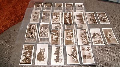 Cavanders Animal Studies F/set F36 Cigarette Cards In Plastic Sleeves - 1936