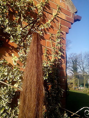 equine tail extention chestnut