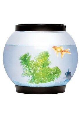 New 5 Litre Glass Fish Bowl With 2 LEDs; Black