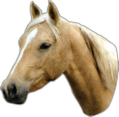 PALOMINO HORSE CAR TRUCK MAGNET Rivers Edge Art NEW Animal Pony Equestrian Decal