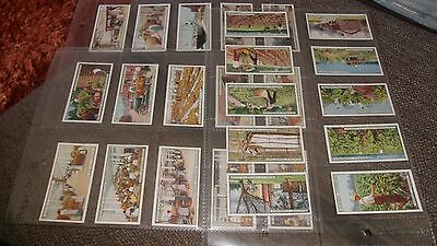 John Player Players From Plantation To Smoker Cigarette Cards & Sleeves  1926