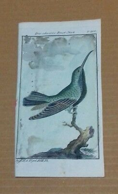 1771 antique art engraving buffon birds naturgeschichte der vogel hand Coloured